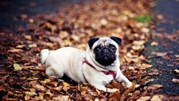 Benefits-of-Garlic-for-Dogs