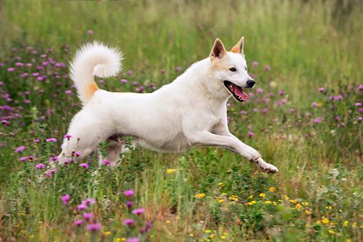 Garlic-for-dog's-cardiovascular-health
