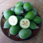 10-Amazing-Health-Benefits-of-Feijoa
