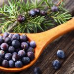 10-amazing-health-benefits-of-juniper-berry-essential-oil
