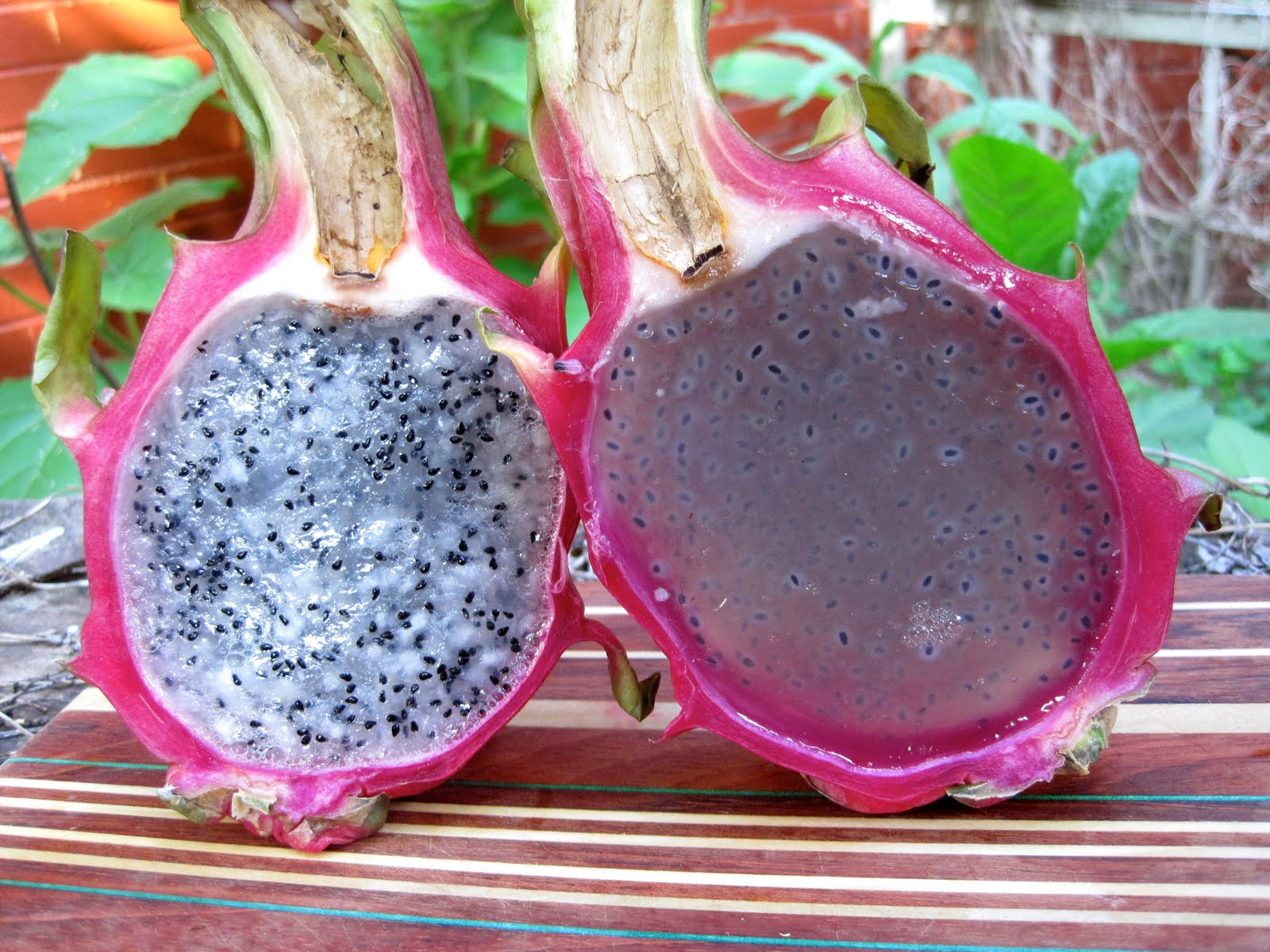 Dragon-fruit-benefits-with-fats