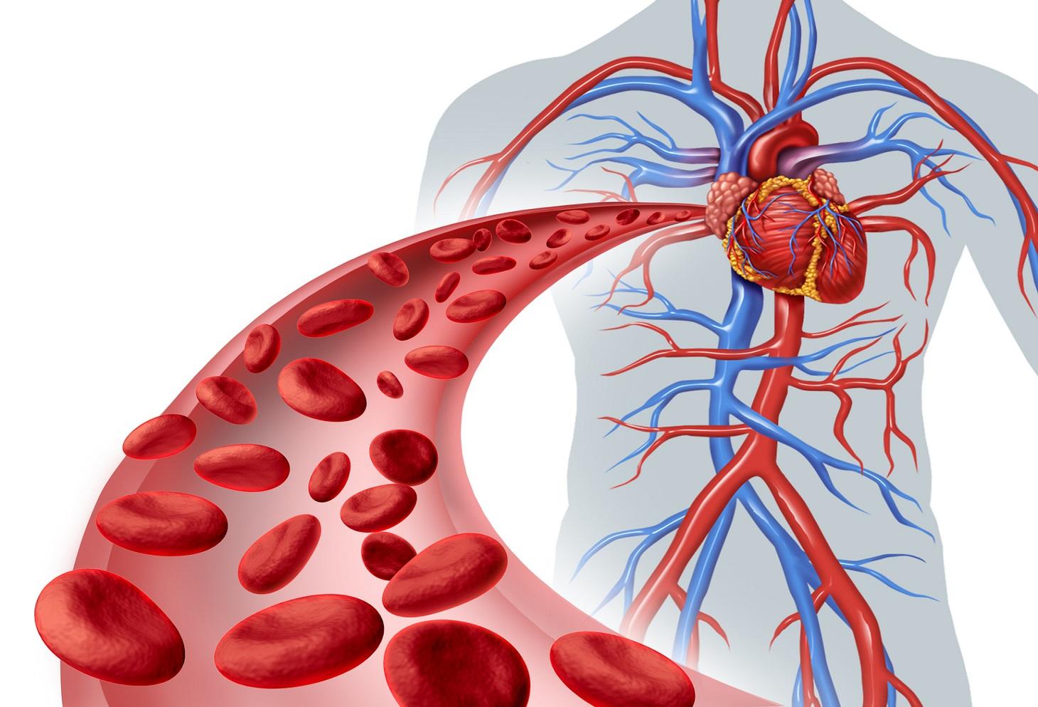 Jujube-fruit-for-proper-blood-circulation