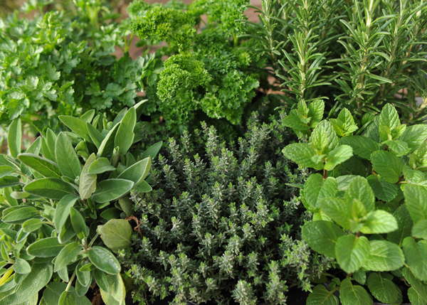 Mixed-herbs-as-thyme-substitute