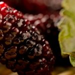 Benefits-and-Uses-of-Mulberry-Tree