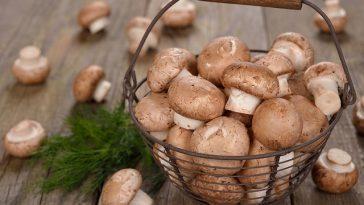 Mushroom-nutritional-value