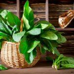Spinach-benefits