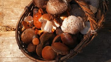 mushroom-benefits